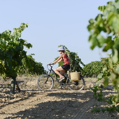 Wine Tourism on ebike with vineyards on all sides and GPS to guide you!