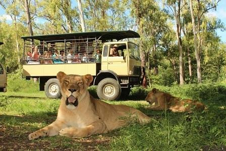 Come and enjoy our Big Cat Drive thru, great for families!