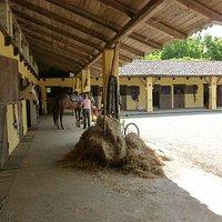 il cortile principale con le scuderie