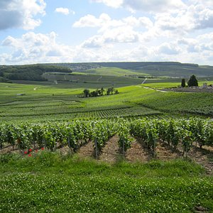 Vineyards at Hautvillers-the birthplace of Champagne