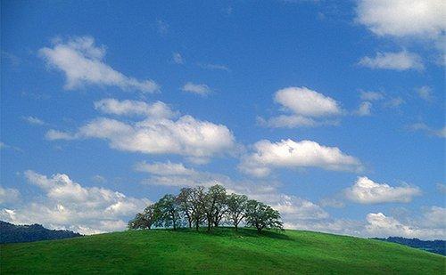 Napa Valley Hillside by Charles O'Rear (Copyright Charles O'Rear)