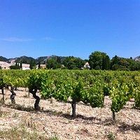 The vineyard!
