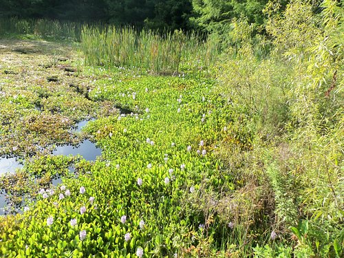 Water plants and flowers--turtles and gators in here