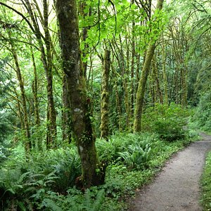 Along the Wildwood Trail in Forest Park, OR
