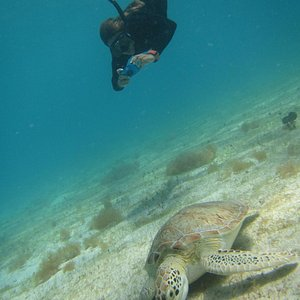 Nikki swimming with the turtles!