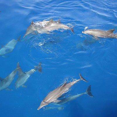 Delfine spielen!