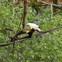 Edward Youde Aviary - bird nibbling on mango remains