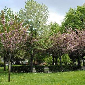 Vista Giardini Reali