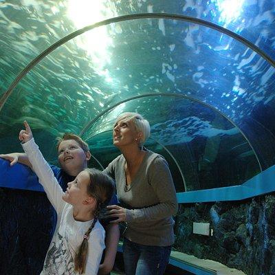 Underwater walk-through tunnel
