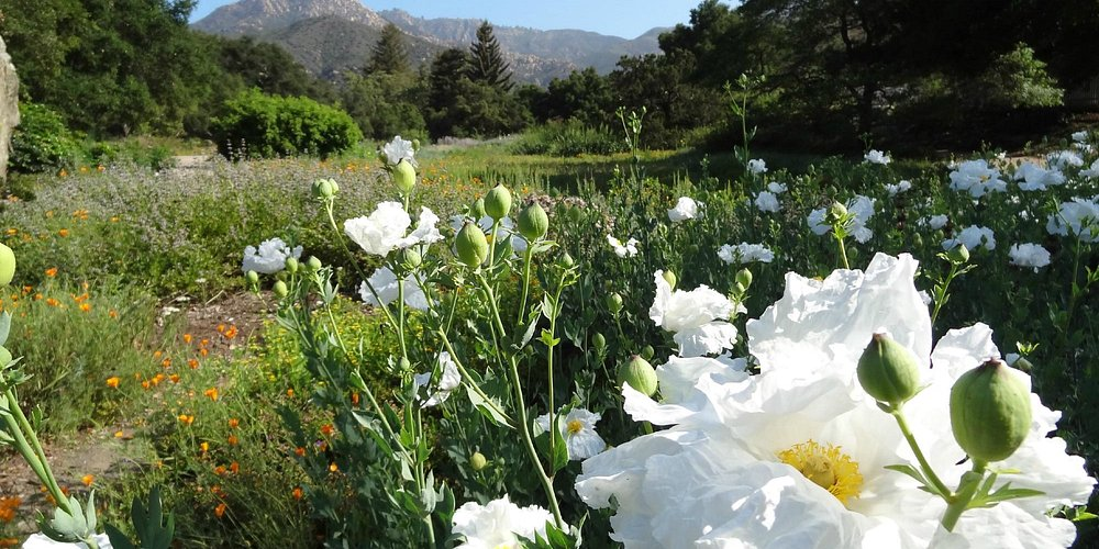 SBBG Meadow with views to La Cumbre Peak, Santa Ynez Mtns