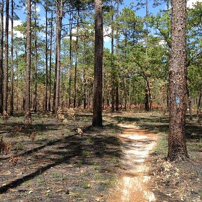 Munson Trail