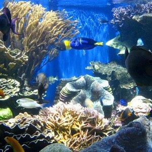 Colourful tropical fish