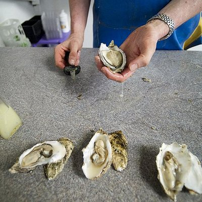 amazingly fresh oysters at great prices