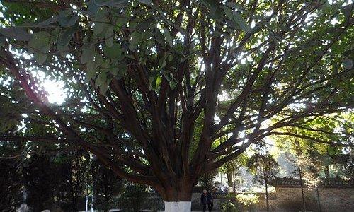 C'est sans conteste pendant la matinée que le jardin public de Dali se montre sous son meilleur