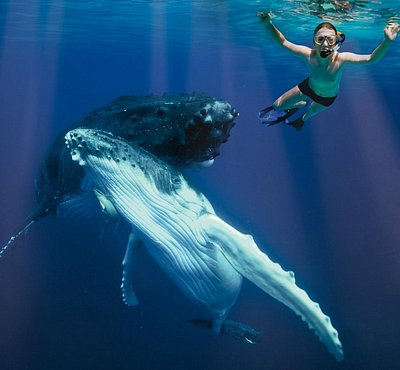 Swim with the Gentle Giants
