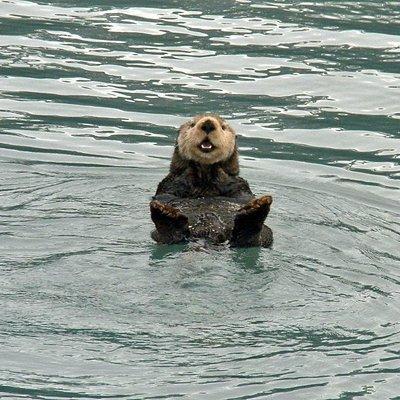 Otter in Resurrection Bay