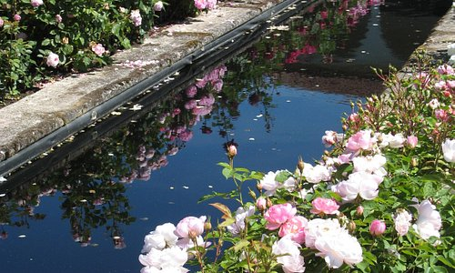 Rose lined pool