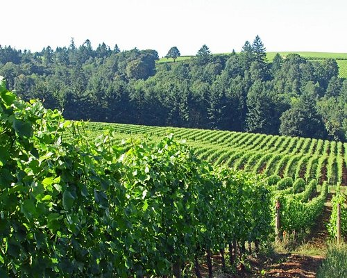 View of the vineyards