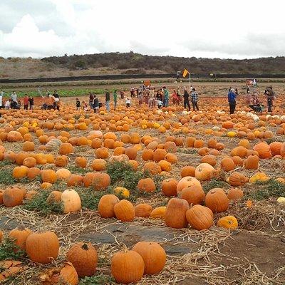 Pumpkin Patch (Oct 2012)