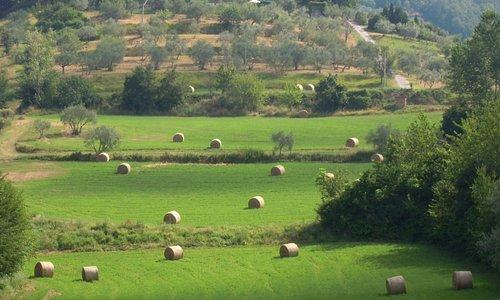 The fields around Il Poggio alle Ville