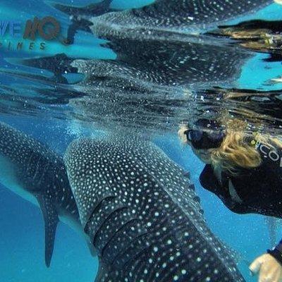 Alana Caskey Wells and Whale Shark