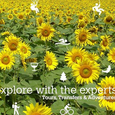 Slovenia Explorer Day Tours are the best in Slovenia
