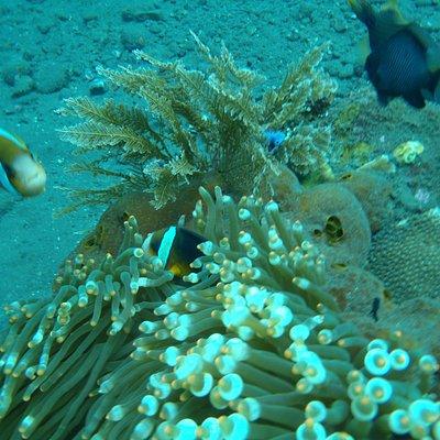 Snorkel foto
