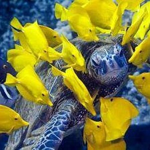 Marine life in harmony - as it should be!