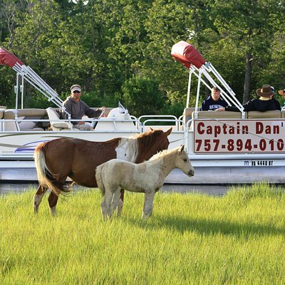 Money Back Guaranteed Wild Pony Cruise