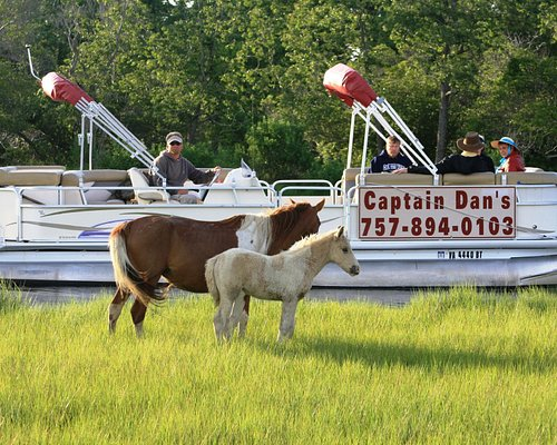 Money Back Guaranteed Wild Pony Cruise