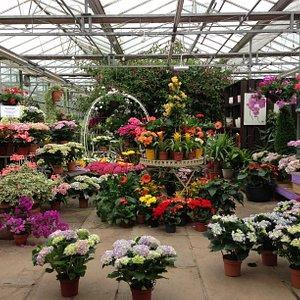 Vivid house plant selection