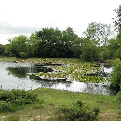 a pond, which looks like a painting by Constable
