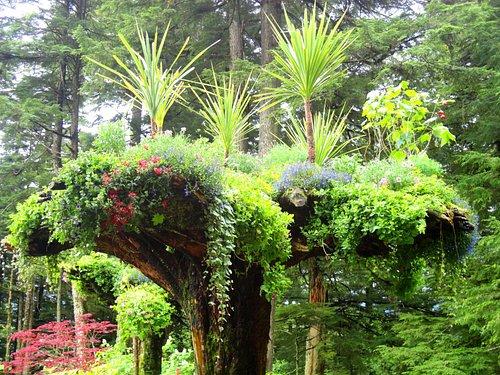 Juneau Rainforest Garden