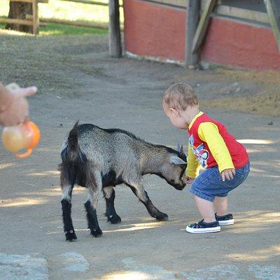 Feeding animals is so much fun