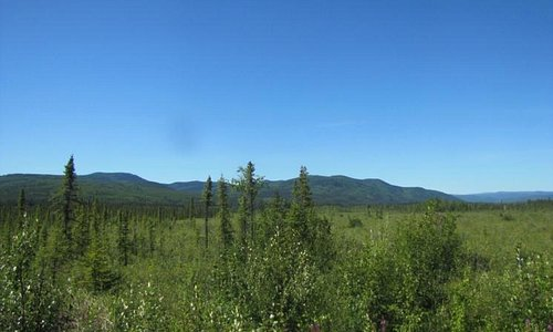 View of the Tundra
