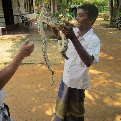 Resident snake expert at work.