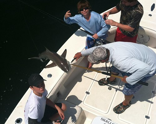 Everyone catches fish out in Tampa Bay- Shark Fishing