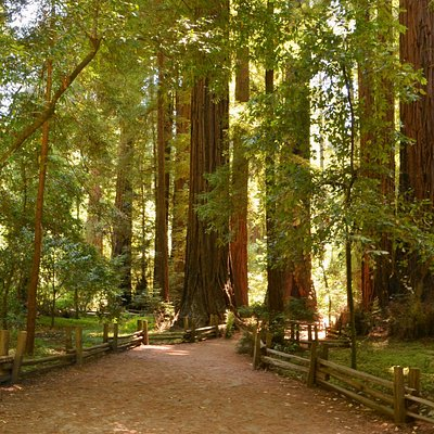 Henry Cowell State Park