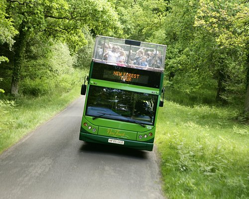 The New Forest Tour Green route