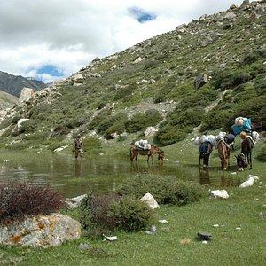 Horseman and his mules