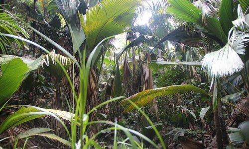 Буйство растительности