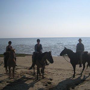 Ved Vadehavet