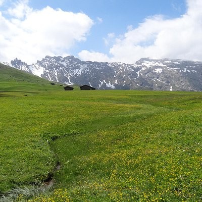 Meadow dotted by farm huts