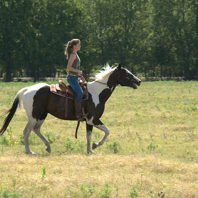 Your welcome to take your horse for a run if your skilled!
