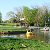 Duck & swan paddle boats at Towne Lake Park, McKinney TX