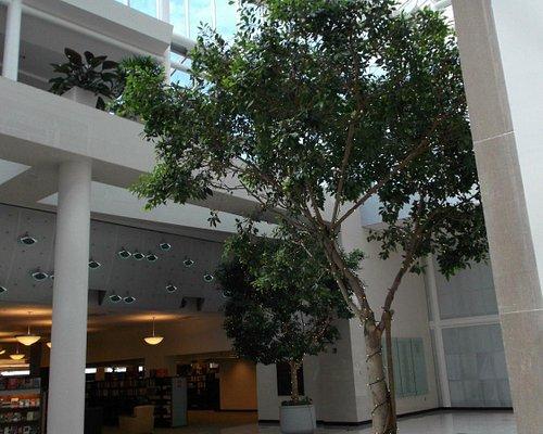 Combo indoor/outdoor w/tree.