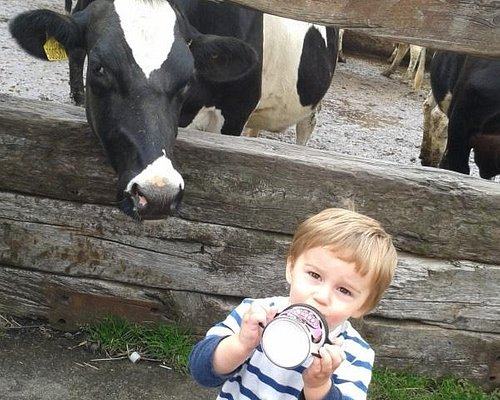 Find out where your milk cones from !
