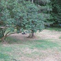 Molalla Forest