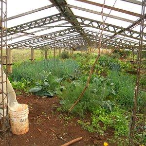 Organic vegetable nursery