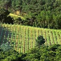 Vignes Bio en plein coeur du Parc Naturel Régional de la Narbonnaise en Méditerrannée